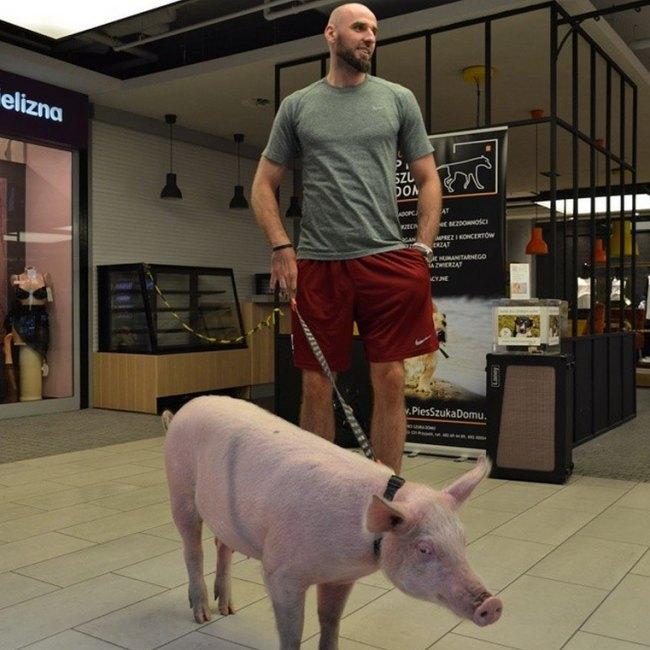Marcin Gortat, non necessariamente il tuo normale centro NBA...